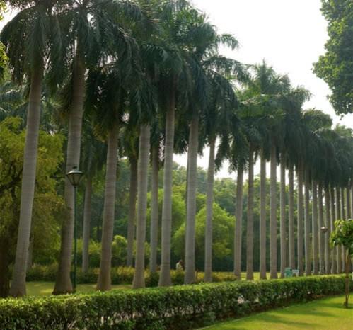 Delhi Visite Garden