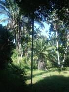 Jardin botanique de Soledad