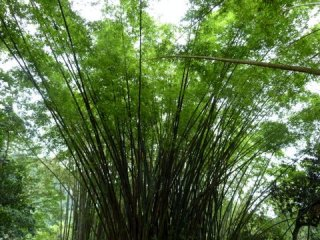 jardin botanique 5