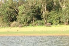 safari en bateau